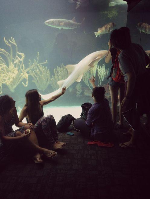 sharkpet