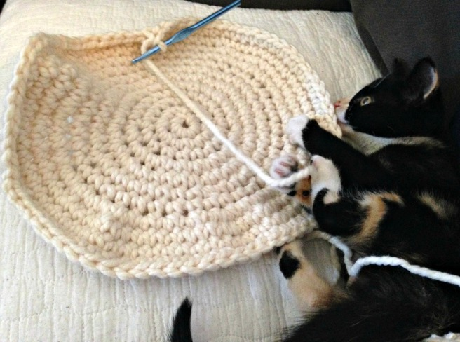 kitty round