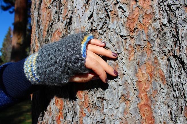 glove tree.JPG